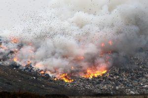 Прокурор заставит мусорный завод в Костроме бороться с птицами