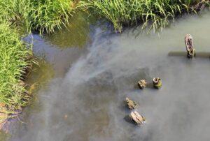 Реку Запрудню в Костроме отравили вредными стоками